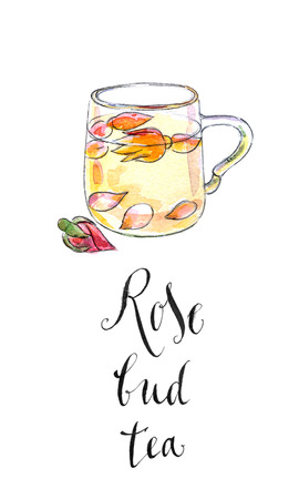 bud: Cup of rose bud tea, hand drawn - watercolor Illustration