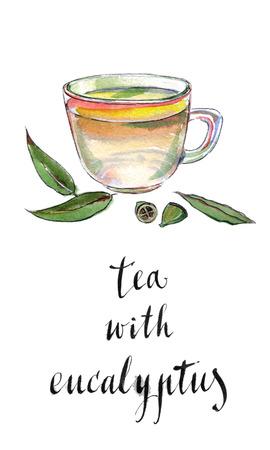 eucalyptus: Eucalyptus leaves and herbal tea, hand drawn - watercolor Illustration