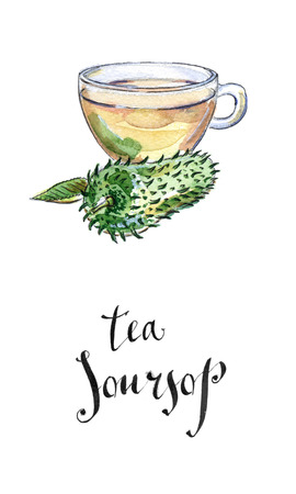 prickly fruit: Glass Cup of Soursop Ceilona Tea, Prickly Custard Apple, hand drawn - watercolor Illustration Stock Photo