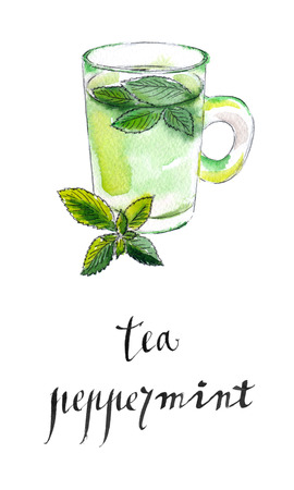 peppermint: Tea cup with fresh peppermint leaves, hand drawn - watercolor Illustration