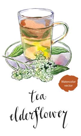 umbel: Elderflower (Sambucus nigra) tea in glass mug with elderflower blossoms, hand drawn - watercolor vector Illustration