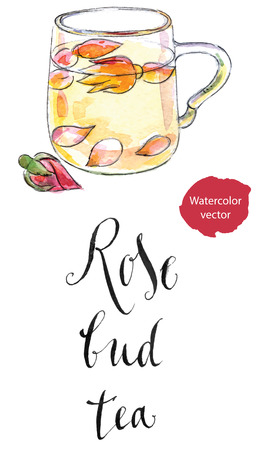 bud: Cup of rose bud tea, hand drawn - watercolor vector Illustration
