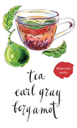 grey: Cup of Earl Grey tea with bergamot, Kaffir lime, hand drawn - watercolor vector Illustration Illustration