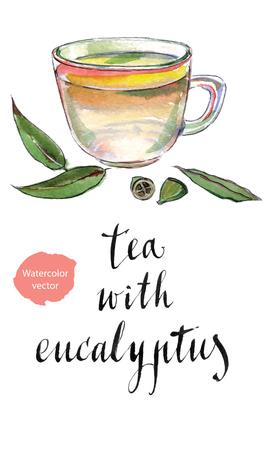 Las hojas de eucalipto y té de hierbas, dibujado a mano de la acuarela - vector Ilustración