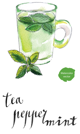 peppermint: Tea cup with fresh peppermint leaves, hand drawn - watercolor vector Illustration