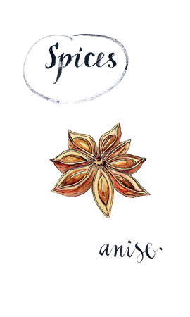 anise: Star anise spice fruit and seeds, hand drawn - watercolor Illustration