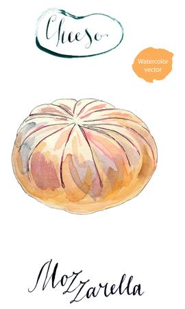 mozzarella: Fresh white mozzarella cheese, hand drawn - watercolor vector Illustration