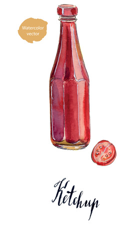 ketchup bottle: Traditional glass tomato ketchup bottle and ripe tomato, hand drawn - watercolor vector Illustration Stock Photo