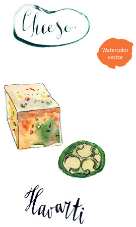 buttery: Spicy cheese havarti, hand drawn - watercolor vector Illustration