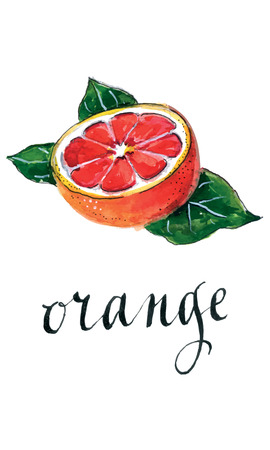 Red orange with leaves, hand drawn - watercolor vector Illustration