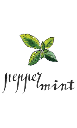 peppermint: Fresh peppermint leaves, hand drawn - watercolor vector Illustration Illustration