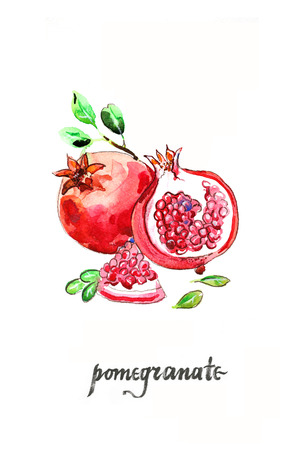 Watercolor hand drawn pomegranates - Illustration