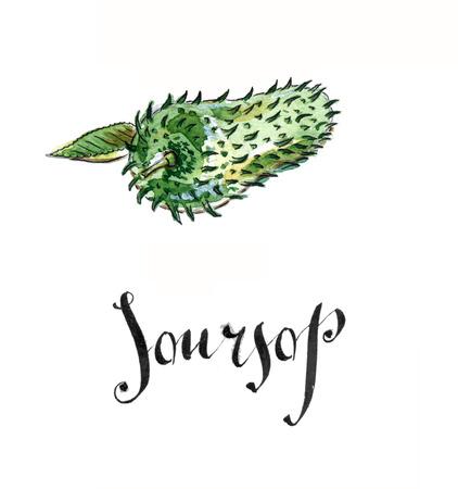 Soursop, prickly custard apple, hand drawn - watercolor Illustration Stock Photo