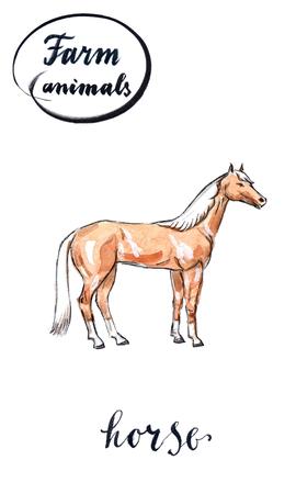 foal: Arabian horse, hand drawn - watercolor Illustration Stock Photo