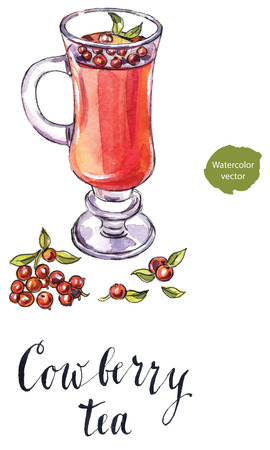 cowberry: Cowberry tea in a cup with fresh berries, hand drawn - watercolor Illustration Stock Photo