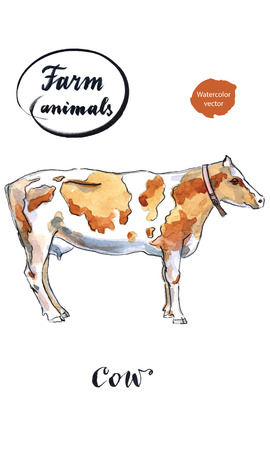domesticated: Dairy cow, hand drawn - watercolor Illustration
