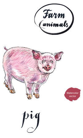 piglet: Cheerful young piglet, hand drawn - watercolor Illustration Stock Photo