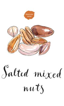 macadamia: Assorted mixed nuts: hazelnuts, walnuts, almonds, pine nuts, pistachio, cashew, macadamia nut. Hand drawn - watercolor Illustration