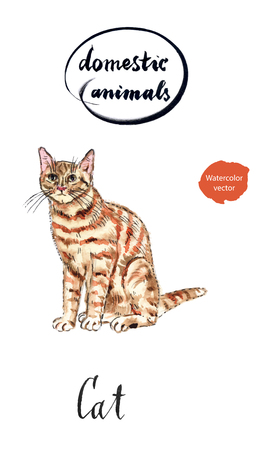 gaze: Ginger tabby cat, hand drawn - watercolor Illustration
