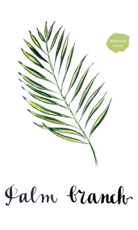 feathery: Green tropical plant, palm branch, hand drawn - watercolor Illustration Stock Photo