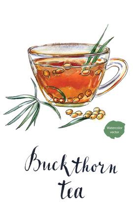 Glass of buckthorn tea, hand drawn - watercolor Illustration Vektorové ilustrace