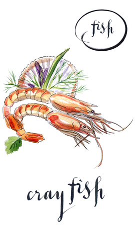 Cooked crayfishes with green vegetable, hand drawn - watercolor Illustration Stock Photo