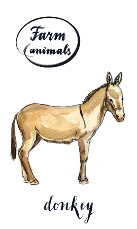 Beige standing donkey, hand drawn - watercolor Illustration