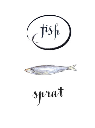 gold cans: Sprat fish, hand drawn - watercolor Illustration