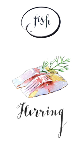 Two pieces of herring with dill, hand drawn - watercolor Illustration