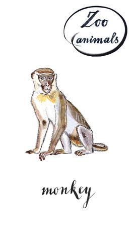 cheeky: Monkey, hand drawn - watercolor Illustration