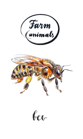 entomologist: Bee with honey on paw, hand drawn - watercolor Illustration Stock Photo