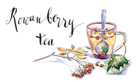 Cup of rowanberry tea, twig of rowanberry and leaf, hand drawn - watercolor Illustration