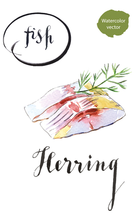 Two pieces of herring with dill, hand drawn - watercolor vector Illustration Illustration