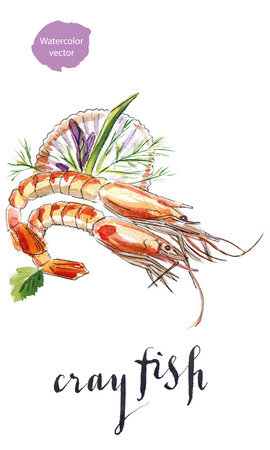 Cooked crayfishes with green vegetable, hand drawn - watercolor vector Illustration Illustration