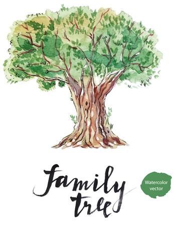 Un vecchio albero generoso di oliva estratto, disegnati a mano - acquerello illustrazione vettoriale