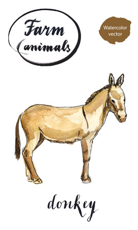 foal: Beige standing donkey, hand drawn - watercolor vector Illustration
