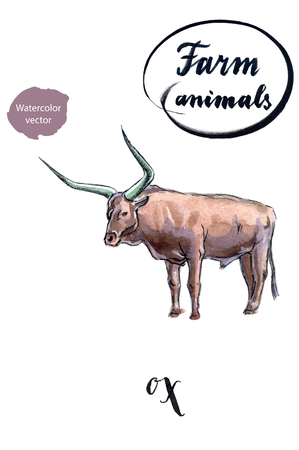 horned: Standing horned ox, hand drawn - watercolor vector Illustration