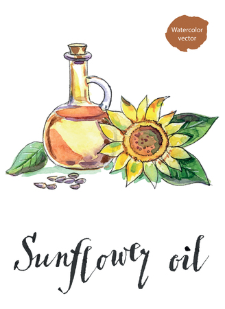 Bottle of sunflower oil, sunflower and seeds, hand drawn - watercolor vector Illustration Illustration
