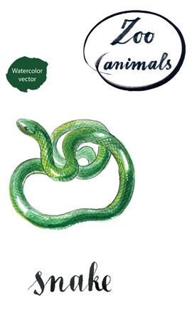 Green coiled snake, hand drawn - watercolor vector Illustration