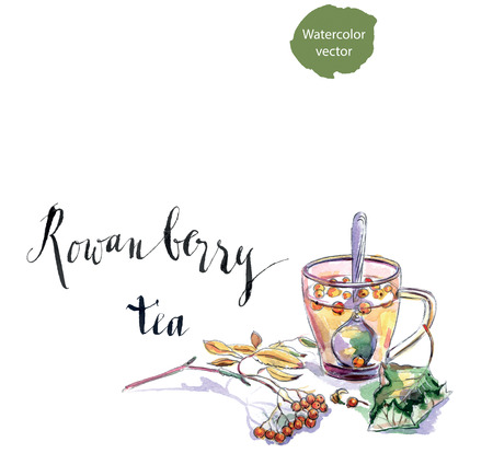 rowanberry: Cup of rowanberry tea, twig of rowanberry and leaf, hand drawn - watercolor vector Illustration