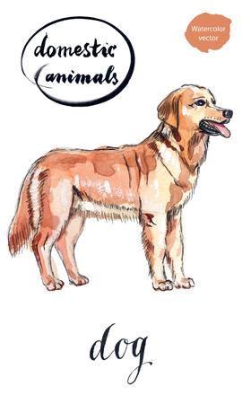 Pretty brown dog, hand drawn - watercolor vector Illustration