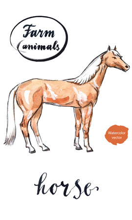 foal: Arabian horse, hand drawn - watercolor vector Illustration