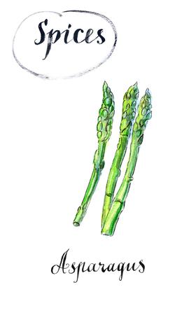 Aquarel asperges plantaardige stengels. Bos van verse groene aspergespruit. Gezond voedsel, het op dieet zijn, het vegetarische ontwerp van het saladerecept, getrokken hand, waterverfillustratie