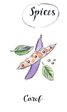 Watercolor group of carob pods whole and half with seeds. Healthy detox natural product., carob powder can be used as a substitute for cocoa. Hand drawn, watercolor Illustration Stock Photo