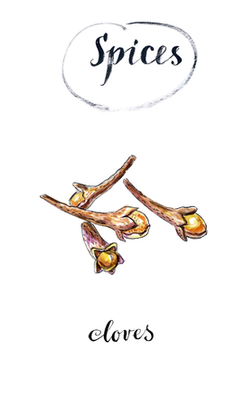 Watercolor dry cloves, carnation, spices, hand drawn, illustration Stock Photo