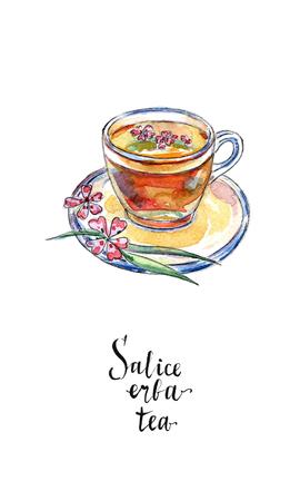 水彩画、手描きイラストで salice エルバ茶 (ウィロー ハーブ茶) のガラスのコップ 写真素材 - 85801343