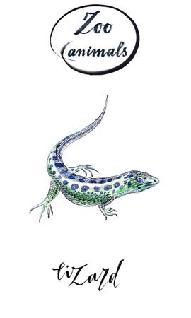 Lizard gecko in watercolor, hand drawn, illustration