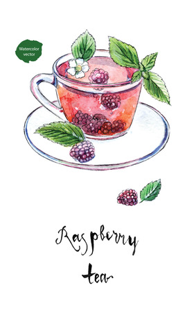 Glass cup of summer raspberry tea with fresh raspberry, flower and leaves in watercolor, hand drawn, vector illustration