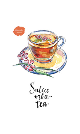 Glass cup of salice erba tea (willow-herb tea) in watercolor, hand drawn, vector illustration  イラスト・ベクター素材