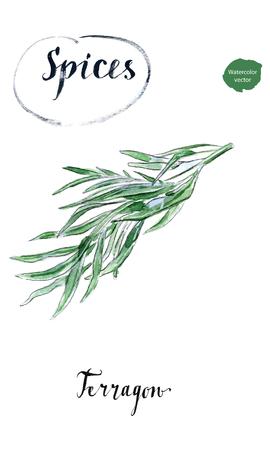 Ramoscello dell'erba fresca del terragono in acquerello, disegnato a mano, illustrazione di vettore Vettoriali
